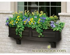 Spring windowbox garden of daffodils and pansies