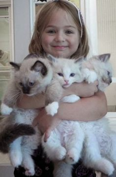 Ragdoll Cats  &  Kittens from Cashmere Rags .._but they are Expensive ...