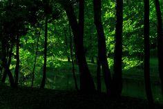 Green forest by Paweł Chrząszczewski on tookapic