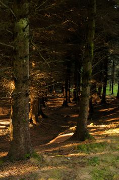 Ticknock, Dublin mountains, Ireland