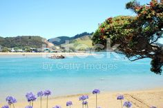 Pataua Estuary, Whangarei District, Northland, New Zealand royalty-free stock photo African Lily, Image Now, Summer Days, New Zealand, Royalty Free Stock Photos, Beach, Outdoor, Outdoors, The Beach