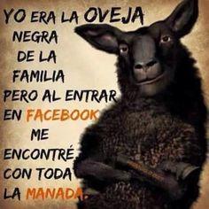 Oveja negra de la familia