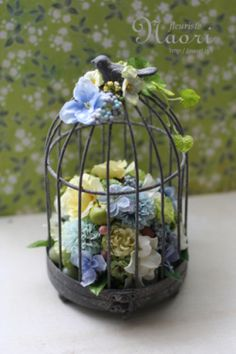 Hydrangea blue birdcage