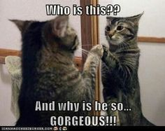 Lolcats Page 2 Lolcats n' Funny Cat Pictures funny cat pictures Chee - Funny Cat Quotes Funny Animal Pictures, Cute Funny Animals, Funny Cute, Cute Cats, Funny Images, Hilarious, Silly Cats, Crazy Cats, Cats And Kittens