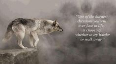 "Anonymous ART of Revolution: ""One of the hardest decisions you will ever face in life, is choosing; whether to try harder or walk away. Lone Wolf Quotes, Wolf Qoutes, Wolf Pack Quotes, Positive Quotes, Motivational Quotes, Inspirational Quotes, Just Keep Walking, Hard Decisions, Thought For Today"