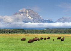 Top 10 Places to See Wildlife in North America : Grand Teton National Park. Wyoming