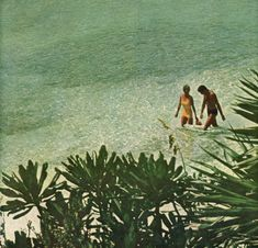 calm in trees — aestheticdivision: The Bahama Islands, 1965 Beach Aesthetic, Summer Aesthetic, Aesthetic Photo, Aesthetic Pictures, Vintage Surf, Tropical, Old Money, Island Life, Summer Girls