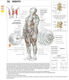 deadlift22.jpg (824×958)