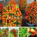 50 Pz 2014 Real New Piante Da Esterno Inverno Arrampicata Albero In Vaso Semi della Frutta Bonsai Cina Casa e Giardino Spedizione libero