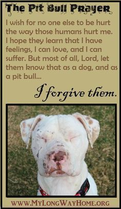 Pit bull Prayer #PitBullQuotes #pitbulls