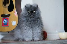 I <3 Colonel Meow
