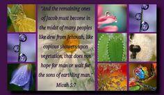 Micah 5:7