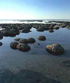 The Pinnacles Western Australia Hamelin's Pool (Stromatolites)