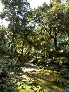 molieresphotography:  Santa Maria del Cami,Mallorca, Spain. Copyrights Val Moliere, Jan 2015