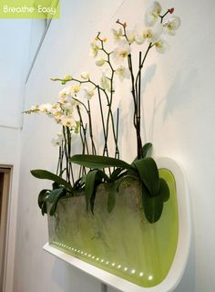 "Breathe Easy is an aeroponic growing system designed to improve home air quality. It utilizes toxin absorbing plants that clean the air and add humidity. ""Phalaenopis (moth orchid) is weel suited for the bedroom as its one of the few plants that produce oxygen at night, likes shady environments, flowers for long periods, etc...."""