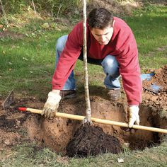 13 Tips for Trouble-Free Tree Planting: Don't Plant Too Deep. Plant the tree so its root collar—the trunk flare right above the root system—is about 1 in. above the soil level. Read more: http://www.familyhandyman.com/landscaping/how-to-plant-a-tree-that-will-thrive