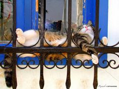 siesta wherever you can...