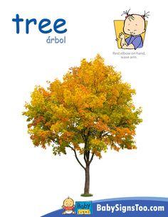 Sign for TREE  www.BabySignsToo.com   #BabySigns #BabySignLanguage #BabySign