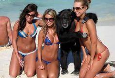 get myself a monkey