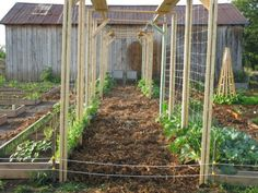 Raised bed garden trellis - I can imagine a great tunnel by the end of the summer!