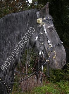 renessaince horse tack - Szukaj w Google