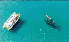 ballenas valdes Península de Valdés en Patagonia: ballenas, pingüinos, elefantes y lobos marinos