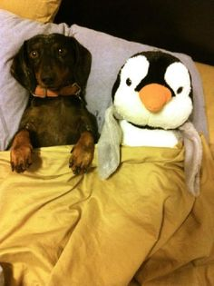 #All tucked in!