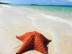 Top Ten Things to Know Before Visiting Vieques Puerto Rico