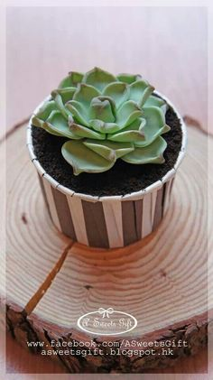 Succulent Cupcake  (Banana cupcake with ganache and oreo topping) (www.facebook.com/ASweetsGift)