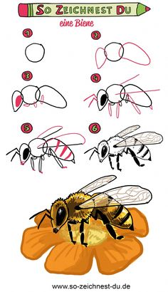 This is how you draw a bee - nimivo sites Learn Art, Learn To Draw, Cool Pictures, Beautiful Pictures, Butterfly Drawing, Bee Drawing, Art Disney, You Draw, Painting For Kids