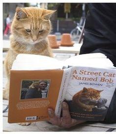 Beautiful StreetCat Bob. Such a wonderful little bundle of purr :)
