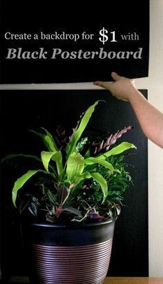 The Rainforest Garden: Shoot Beautiful Plant Photos for $1