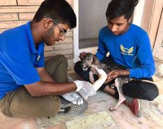 Even though his body was ready to give up, he kept wagging his tail through his pain as the rescuers were coming to his rescue. Although his trust was abused in the most unbelievable way, Gazi stil…