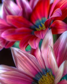 ~~African Daisies 3 by Bette Devine~~