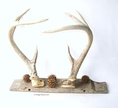 Mounted Deer Antlers Rustic Prim Farmhouse Lodge by 3vintagehearts, $92.50