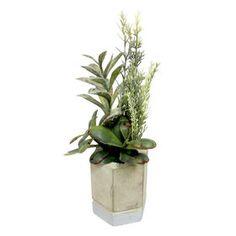 Picture of Succulent in Hexagon Concrete Pot- 10 in.