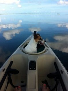Adorable Jack Russell in Kayak