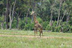 faune africaine 7_resultat