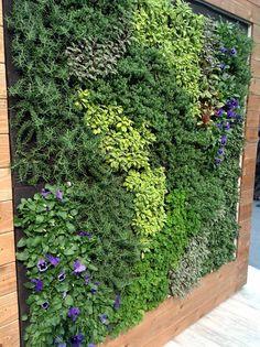 Edible Living Wall