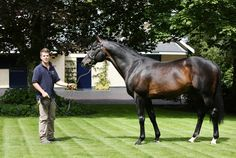 Yeats(2001)(Colt) Sadler's Wells- Lyndonville By Top Ville. Outcross In First 5 Generations. 22 Starts 14 Wins 2 Seconds 1 Third. Won Ascot Gold Club(Eng-1)Four Times, Coronation Cup(Eng-1), Goodwood Cup(Eng-1)Twice,  Irish St Leger(Ire-1), Prix Royal Oak(Fr-1).