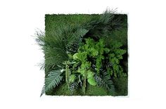 Plant Frame - 80x80 by styleGREEN
