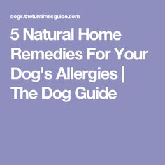 5 Natural Home Remedies For Your Dog's Allergies | The Dog Guide