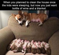 Love Cute Animals shares pics of playful animals, cute baby animals, dogs that stay cute, cute cats and kittens and funny animal images. Cute Funny Animals, Funny Animal Pictures, Cute Baby Animals, Funny Cute, Funny Dogs, Animal Pics, Humorous Pictures, Baby Pictures, Cute Puppies