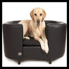 The Chester & Wells Hampton faux leather dog bed is a real classic design and comes in three sizes. Stylish dog beds to suit any room available now Dog Cots, Dog Beds For Small Dogs, Large Dogs, Dog Sofa Bed, Couch, Dog Furniture, Leather Furniture, Furniture Ideas, Buy A Dog