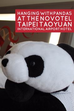 Hanging with Pandas at the Novotel Taipei Taoyuan International Airport Hotel