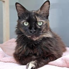 74 Best Adoptable Cats at SF SPCA images in 2018   Adoption