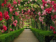 Butchart rose gardens