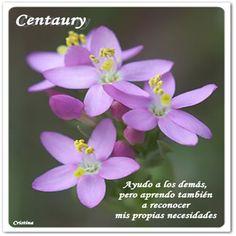 """""""...Y no olvidemos que las Flores de Bach  son inteligencia emocional líquida...""""   ~Ricardo Orozco~                         ..."""