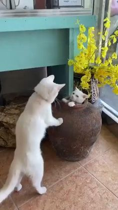 Funny Cute Cats, Cute Baby Cats, Cute Little Animals, Cute Cats And Kittens, Cute Funny Animals, Kittens Cutest, Cats Doing Funny Things, Cute Animal Videos, Funny Animal Pictures