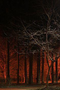 City Trees (by 1riverat)